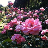 Photo taken at International Rose Test Garden by Carlos O. on 8/16/2012