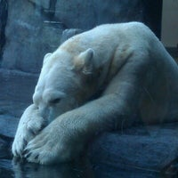Photo taken at Polar Bear Odyssey At Como Park by Patrick A. on 8/15/2012