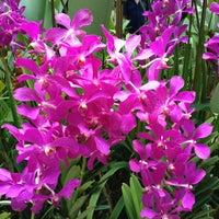 Das Foto wurde bei National Orchid Garden von Nitin B. am 4/8/2012 aufgenommen