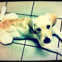 Photo taken at Best Care Animal Hospital by Laura G. on 8/24/2011