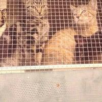 Photo taken at Catalina Island Humane Society Inc. by Airalin B. on 1/26/2012