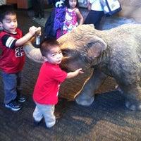 Снимок сделан в San Diego Natural History Museum пользователем Lysabeth L. 4/3/2012