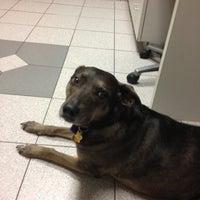 Photo taken at Stoney Creek Animal Hospital by Ryan K. on 7/12/2012
