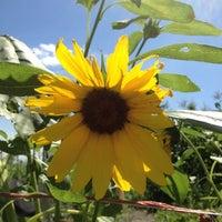 Photo taken at Eagle Creek Park by Ann J. on 8/5/2012