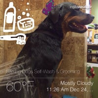 Barking dogs self wash grooming pet service in las vegas photo taken at barking dogs self wash ampamp grooming by cathy v solutioingenieria Gallery