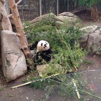 Photo taken at Giant Panda Research Station by Zach S. on 1/20/2015