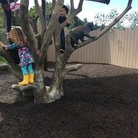 Foto scattata a Koala Exhibit da Zach S. il 3/11/2018