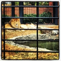 Photo taken at George H. Carroll Lion Habitat by Blake E. on 11/23/2012