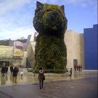 1/2/2013에 Jonathan V.님이 Puppy (Guggenheim)에서 찍은 사진