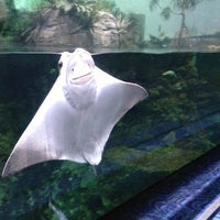 Photo taken at Moody Gardens Aquarium Pyramid by Ol on 1/1/2013