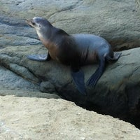 Photo taken at La Jolla Cove by eldad2 M. on 6/22/2013