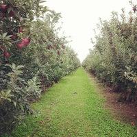 รูปภาพถ่ายที่ Golden Harvest Farms โดย Rick M. เมื่อ 9/22/2013