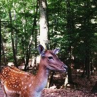 Photo taken at Wild- & Erlebnispark Daun by Natalia on 8/16/2013