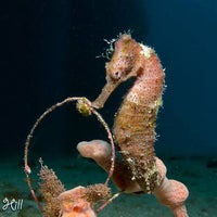 Photo taken at N2theBlue Scuba Diving by N2theBlue Scuba Diving on 11/21/2014