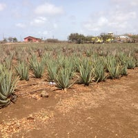 Foto tomada en Aloe Vera Plantation. por Rolf K. el 6/18/2014