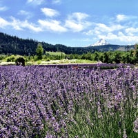 Photo taken at Hood River Lavender by Stephanie C. on 7/13/2013