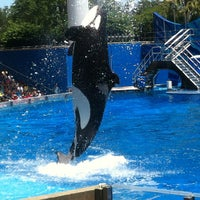 Photo taken at SeaWorld Orlando by Ricardo C. on 5/27/2013