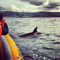 Photo taken at Whale Watching Terra Azul Azores by Ariadna on 10/2/2013