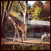 Photo taken at Zoo Dresden by Andrew J. on 10/20/2012