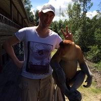 Photo taken at Labuk Bay Proboscis Monkey Sanctuary by Alexey E. on 1/4/2014