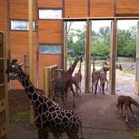 Photo taken at Giraffen by Eric K. on 6/21/2013