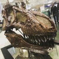 4/24/2017にHeatherがAmerican Museum of Natural History Storeで撮った写真