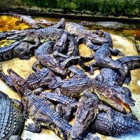 Photo taken at The Million Years Stone Park & Pattaya Crocodile Farm by Igor Z. on 4/14/2013