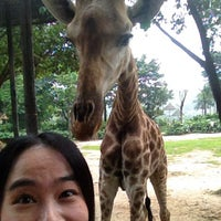 Photo taken at Xiang Jiang Safari Park, Guangzhou by Svily C. on 5/11/2013