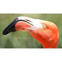 Photo taken at Flamingo Exhibit by Milton on 5/11/2013