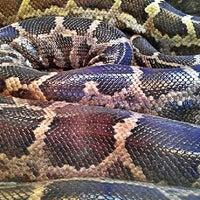 Photo taken at Snake Exhibit at SD Zoo by Milton on 5/8/2013