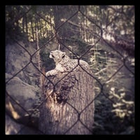 Photo taken at Roger Williams Park Zoo by Derrick B. on 9/20/2013
