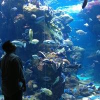 Photo taken at Steinhart Aquarium by Rachel J. on 6/10/2013