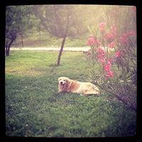 Photo taken at Parque Canino by Rodrigo B. on 11/28/2012
