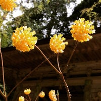 Photo taken at 釈迦山 百済寺 by momo on 4/12/2015