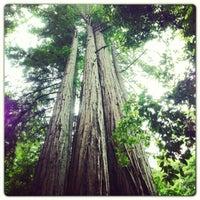Photo taken at Big Basin Redwoods State Park by Madalina C. on 6/10/2013
