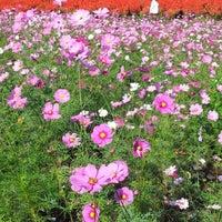 Photo taken at 有明の森フラワー公園 by take2010freedom R. on 10/20/2012