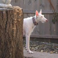 Photo taken at Ibizan Hound Dog Ranch by Travis M. on 10/29/2012