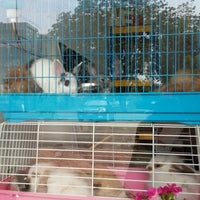 Photo taken at Panda pet house by shahida z. on 4/29/2014