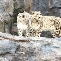 4/4/2017 tarihinde Pubtime B.ziyaretçi tarafından Central Park Zoo - Snow Leopard'de çekilen fotoğraf