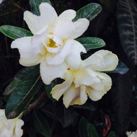 Photo taken at flower lap by ning by Ning@ N. on 4/21/2014