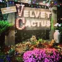 The Velvet Cactus