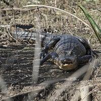 Photo taken at Hidden Alligator Pond by Beth W. on 3/8/2014