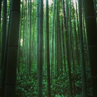 Photo taken at Arashiyama Bamboo Grove by Thiti L. on 6/14/2013