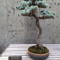 Photo taken at Bonsai Exhibition Garden, North Carolina Arboretum by Sam O. on 8/31/2014