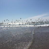 Photo taken at Pajaro Dunes - Shorebirds by Jason C. on 4/4/2015