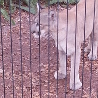 Photo taken at Tampa's Lowry Park Zoo by Jenn S. on 12/17/2012