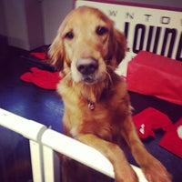 Photo taken at Downtown Dog Lounge by Matthew L. on 1/8/2014
