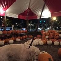 Photo taken at East Blvd. Pumpkin Patch by Jenny T. on 10/15/2016