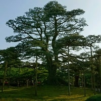 Photo taken at Neagarinomatsu Pine by npao on 5/14/2017