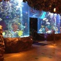 Photo taken at Rainforest Cafe by Leanna O. on 10/23/2012